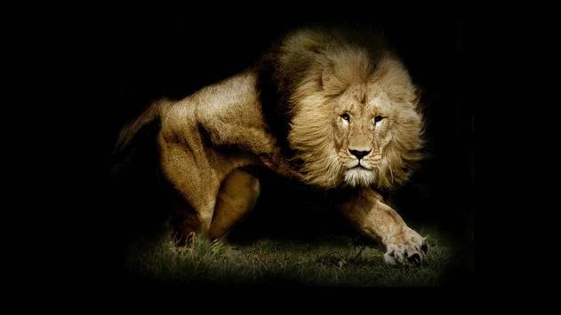 Lion Wallpaper screenshot 2