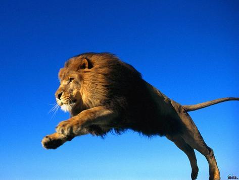 Lion Wallpaper screenshot 5