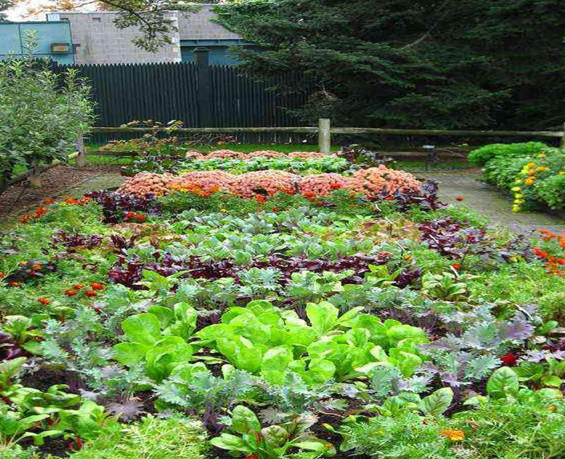 Desain Taman Sayur Backyard For Android - APK Download