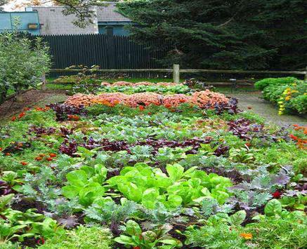Backyard Vegetable Garden screenshot 2