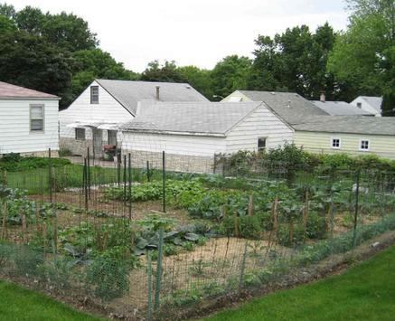 Backyard Vegetable Garden screenshot 3