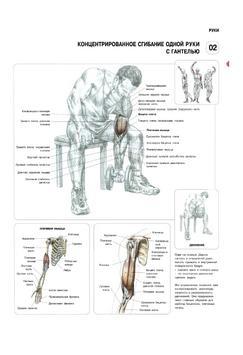 Анатомия силовых упражнений screenshot 1