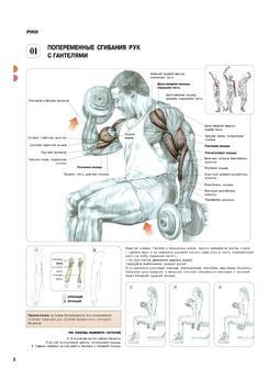 Анатомия силовых упражнений screenshot 2