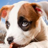 little puppy wallpaper icon