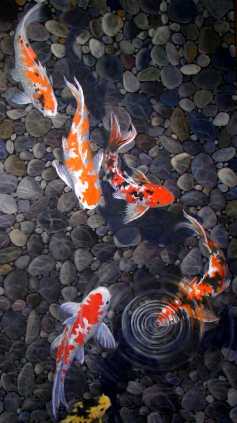 Live Koi Pond Wallpaper For Android Apk Download