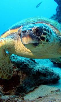 live sea turtle wallpaper poster