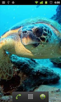 live sea turtle wallpaper screenshot 1