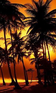 live wallpaper palm tree poster