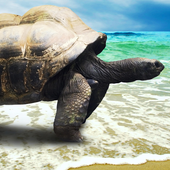 live wallpapers turtles icon