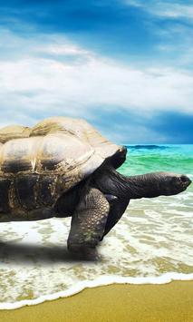 live wallpapers turtles poster