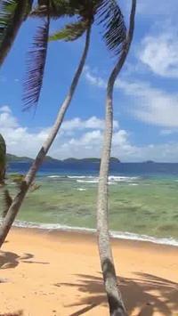 Beach Palms Live WallPaper poster