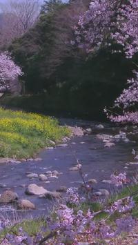 Spring River Live WallPaper poster