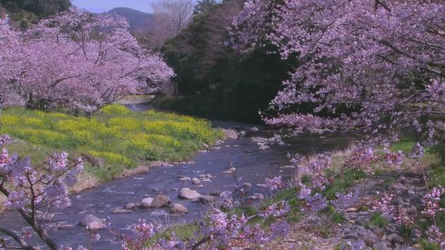Spring River Live WallPaper apk screenshot