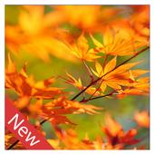 Autumn live wallpaper icon