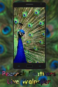 Peacock Feather live wallpaper poster