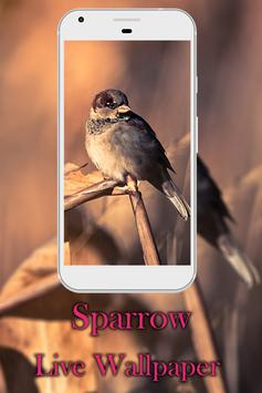 Sparrow live wallpaper poster