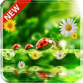 Ladybug Live Wallpaper icon