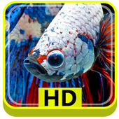 3D Betta Fish HD icon
