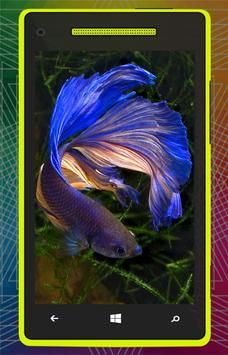 3D Betta Fish HD poster