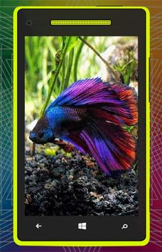 3D Betta Fish HD screenshot 3