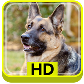German Shepherd Dog HD icon