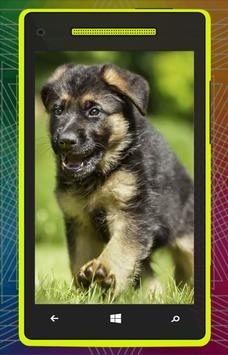 German Shepherd Dog HD poster
