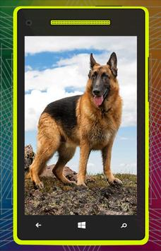 German Shepherd Dog HD screenshot 2