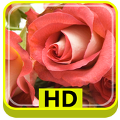 3D Rose Flower HD icon