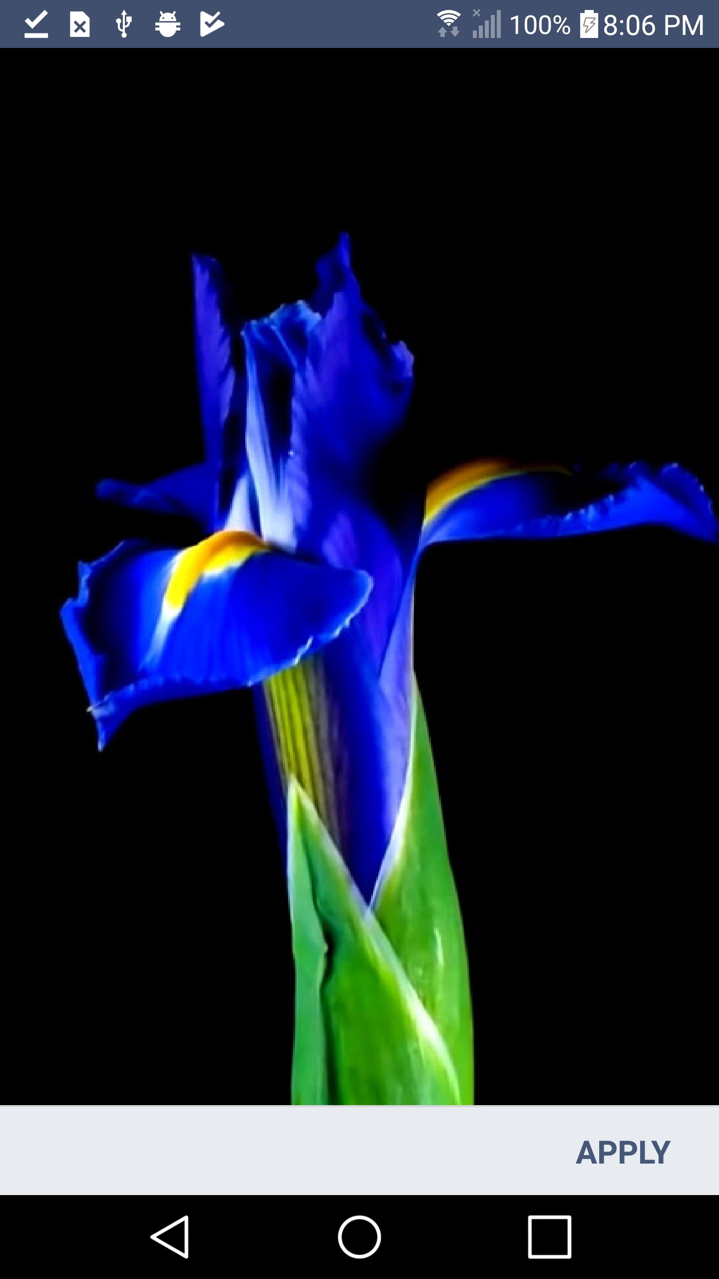 Flowers Live Wallpaper Hd 3d For Samsung Galaxy For Android Apk Download