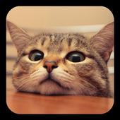 Q Cat Live Wallpaper icon