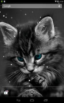 Q Cat Live Wallpaper apk screenshot