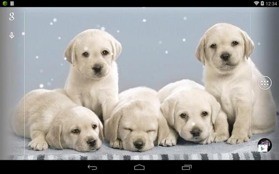 Q Dog Live Wallpaper apk screenshot