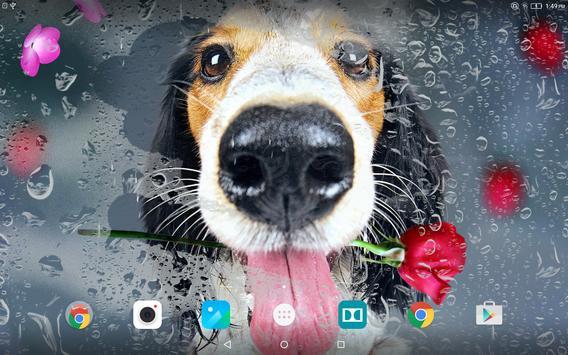 Animals Cute Live Wallpaper apk screenshot