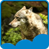 Wolf Live Wallpapers icon