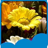 Flower Season Live Wallpapers icon