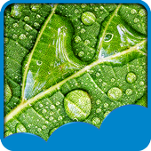 Rainy Day Live Wallpapers icon
