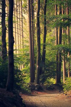 Forest Live Wallpaper screenshot 2