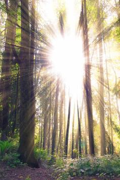 Forest Live Wallpaper screenshot 3