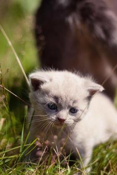 Cute Kittens Live Wallpaper screenshot 1