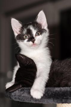 Cute Kittens Live Wallpaper screenshot 2