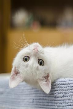 Cute Kittens Live Wallpaper screenshot 3