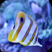 Ocean Fish Live Wallpaper icon
