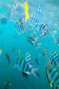 Ocean Fish Live Wallpaper apk screenshot
