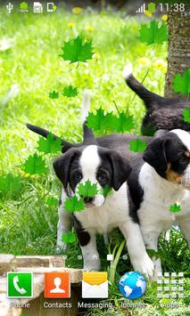 Cute Puppies Live Wallpapers screenshot 3