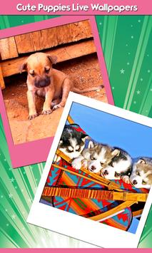 Cute Puppies Live Wallpapers poster