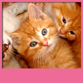 Kittens Live Wallpapers icon