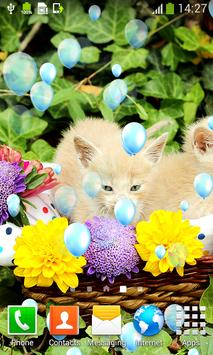 Kittens Live Wallpapers apk screenshot