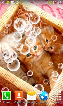 Kittens Live Wallpapers apk screenshot