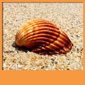 Seashell Live Wallpapers icon