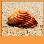 Seashell Live Wallpapers icon